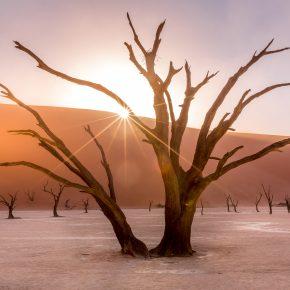 M_W50_Sunrise in Deadvlei - Barbara Jensen Vorster - South Africa